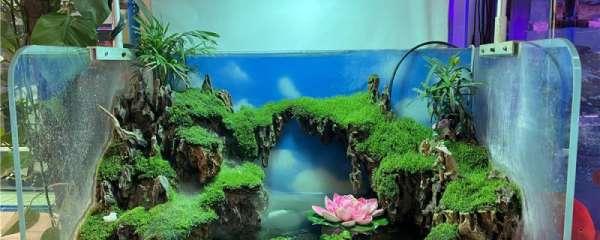 新入缸鱼多久可以第一次换水,新鱼怎么入缸