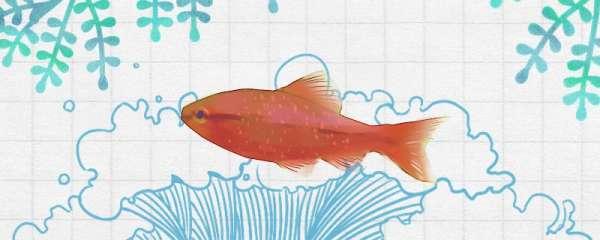 金元宝鱼怎么繁殖,繁殖后怎么孵化