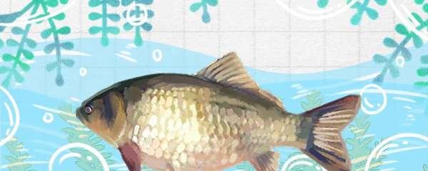 小杂鱼太多怎么钓鲫鱼,用什么饵料