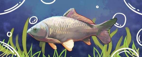 水库钓鲤鱼钓多深,钓底还是钓浮