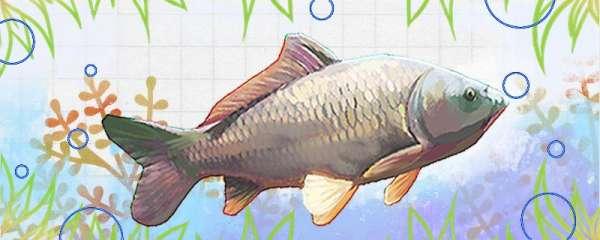 鲤鱼几月份开口吃玉米,几月份钓最好