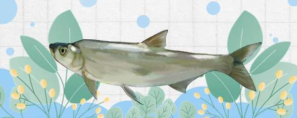 钓一斤多的鲫鱼用多大线组,用什么饵料