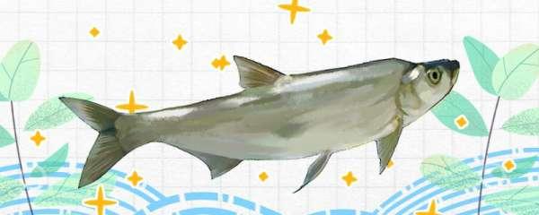 钓翘嘴鱼鱼用什么饵料,用什么钩子最合适