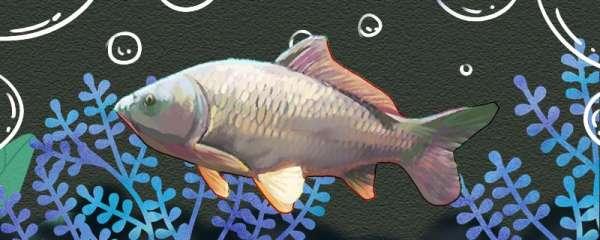 钓鲤鱼用什么漂好,正确调漂怎么调