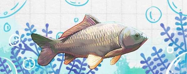 钓3至5斤的鲤鱼用多大钩,用几号线