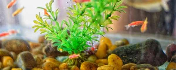 养金鱼鱼缸水位多少最合适,多大尺寸合适