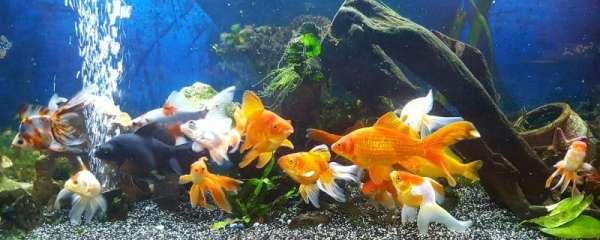 80厘米深的鱼缸用几w氧气泵,养什么鱼需要氧气泵