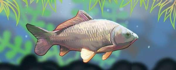 冬季钓鲤鱼开口吗,钓多深的水合适