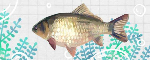 深水能钓鲫鱼吗,需要注意的事项有哪些