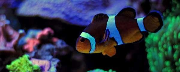 小丑鱼几天喂一次,喂什么食物
