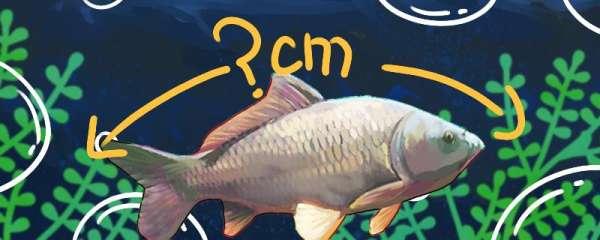 夏钓黑坑鲤鱼容易钓吗,什么饵料最好用