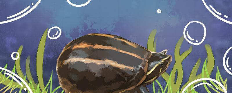 果核蛋龟怎么养,需要过滤吗