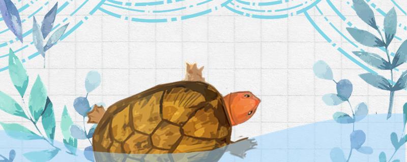 红面蛋龟冬天要加温吗,需要冬眠吗