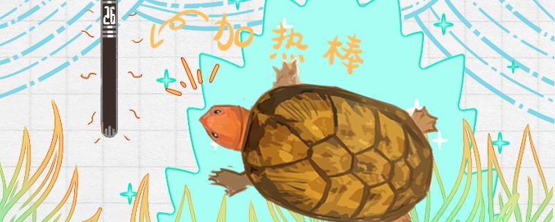 红面蛋龟可以忍受低温么,水温多少合适