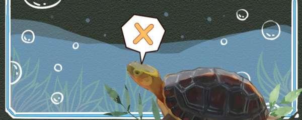 黄缘闭壳龟可以深水养吗,可以冷水养吗