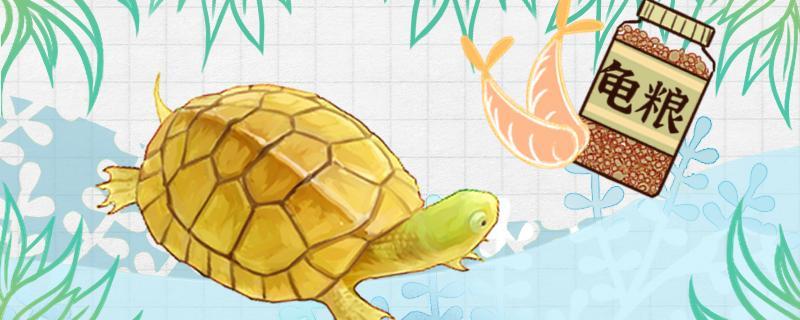 石金钱龟吃什么食物,一天喂几次