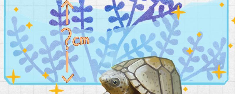 剃刀龟离开水能活多久,水位多深合适