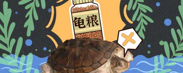 小鳄龟用什么缸养合适,用多大的缸养合适
