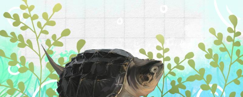 鳄龟适合多深的水,适合多少度