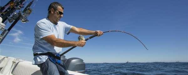 海带可以做饵钓鱼吗,什么动物可以吃海带
