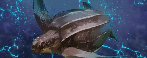 棱皮龟有多大,能活多久