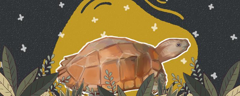 锯缘龟可以冬眠吗,怎么冬眠