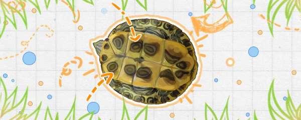 巴西龟害怕的表现,怎么训练它们不害怕