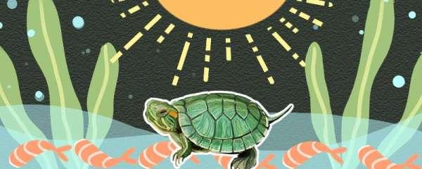 巴西龟可以晒太阳吗,怎么晒太阳