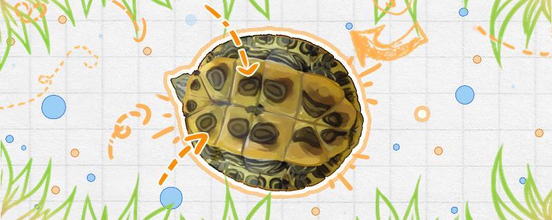 巴西龟为什么缩在壳里不动了,怎么办
