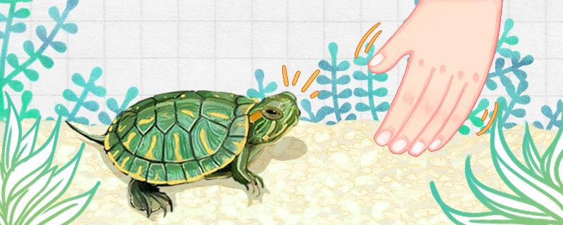 小巴西龟壳上发白什么原因,发白了怎么办