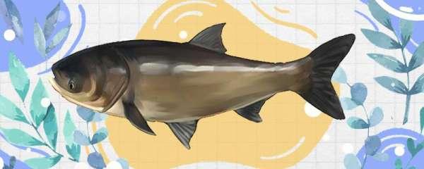 钓鲢鳙20斤左右用什么鱼线组,用什么鱼竿