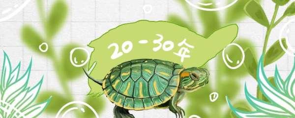 家养的巴西龟寿命多长,怎么养才能活得久