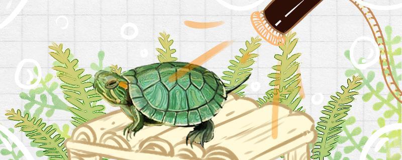 巴西龟咬主人吗,被咬后怎么办