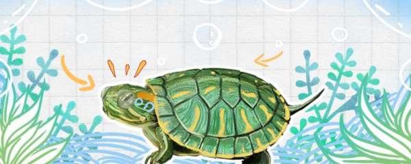 宠物巴西龟怎么养,怎么喂食