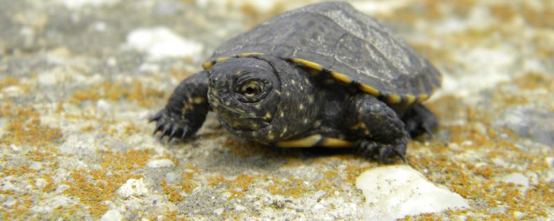 乌龟缸里可以放水草吗,乌龟缸里需要哪些东西