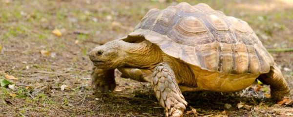 龟几天换一次水比较好,怎么给乌龟换水