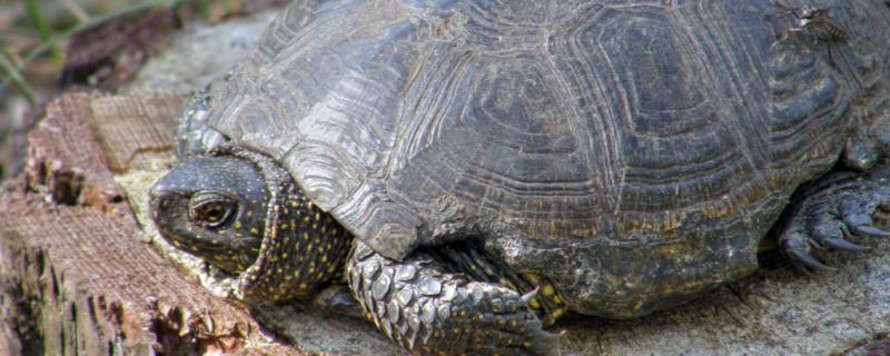 龟腐皮病怎么治,为什么会得腐皮病
