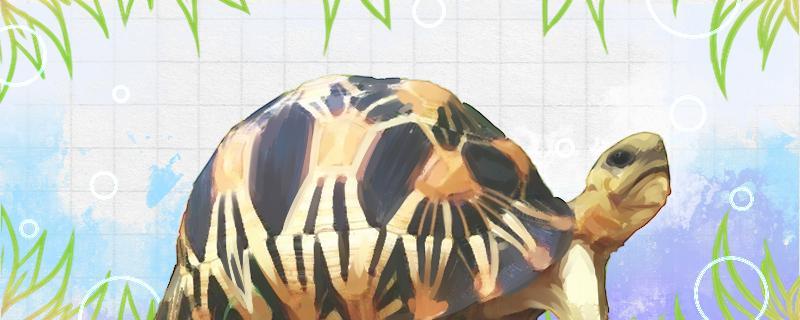 陆龟可以活多久,怎么养才能活得久