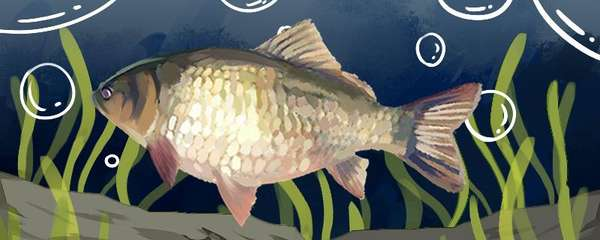 鲫鱼晚上在深水还是浅水,几点开口