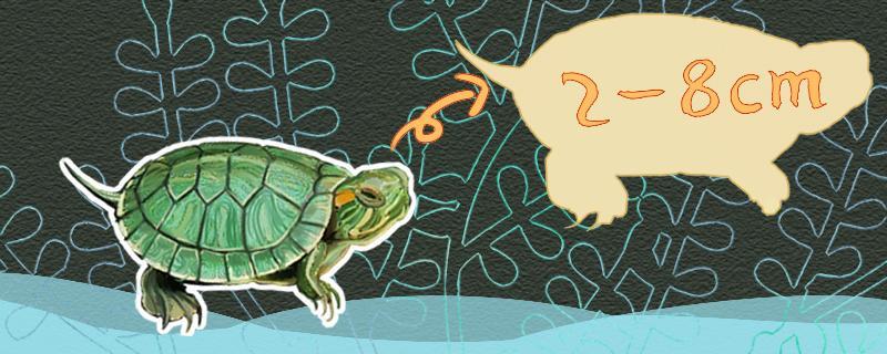 大的巴西龟怎么养,巴西龟能养大吗